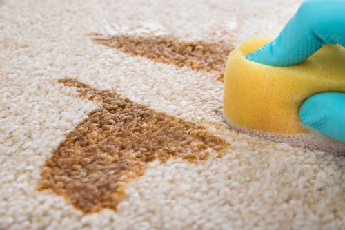 why-is-carpet-spot-cleaning-important